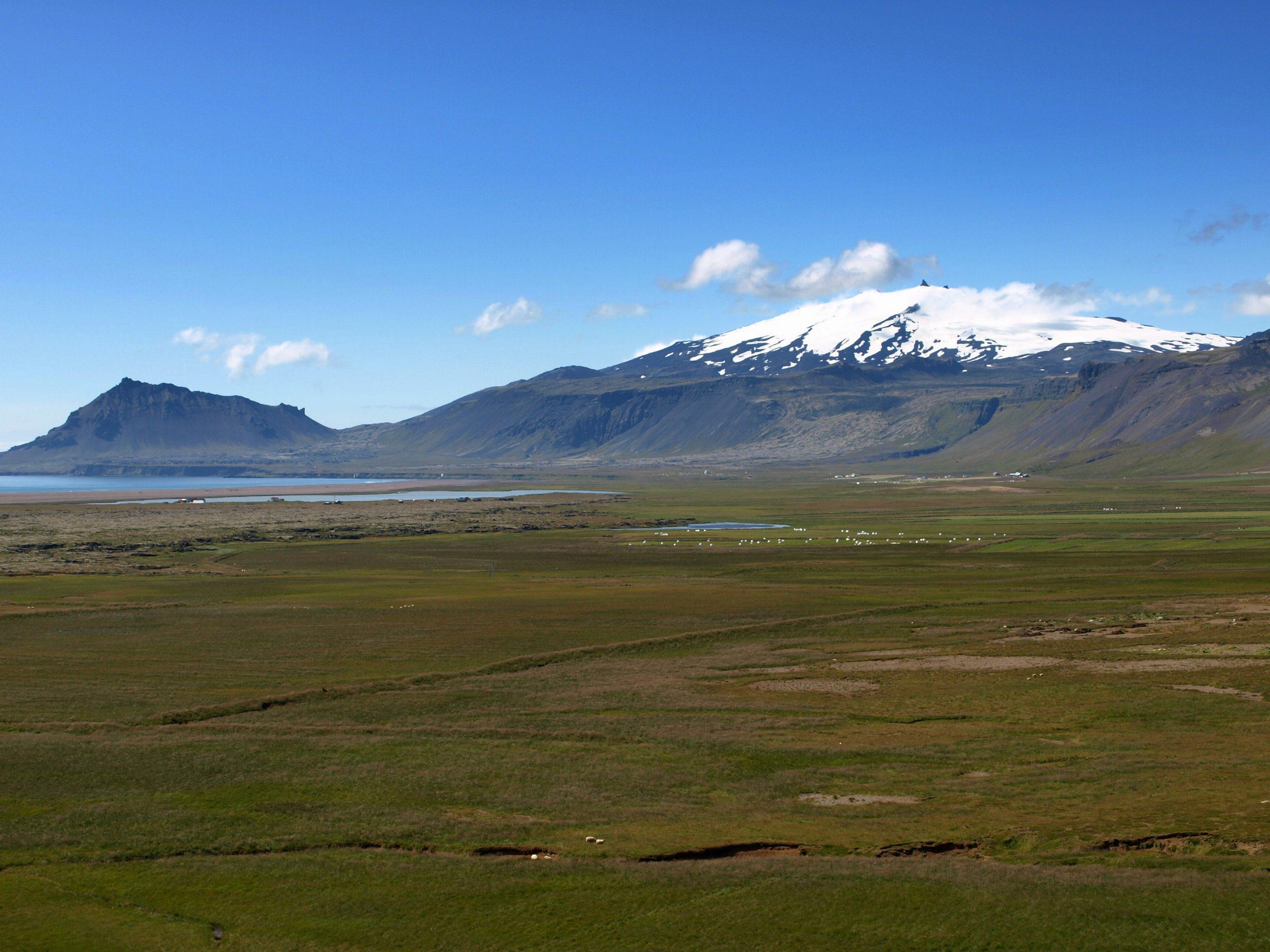 Rauðbrystingahópur í Eyrarbakkafjöru.