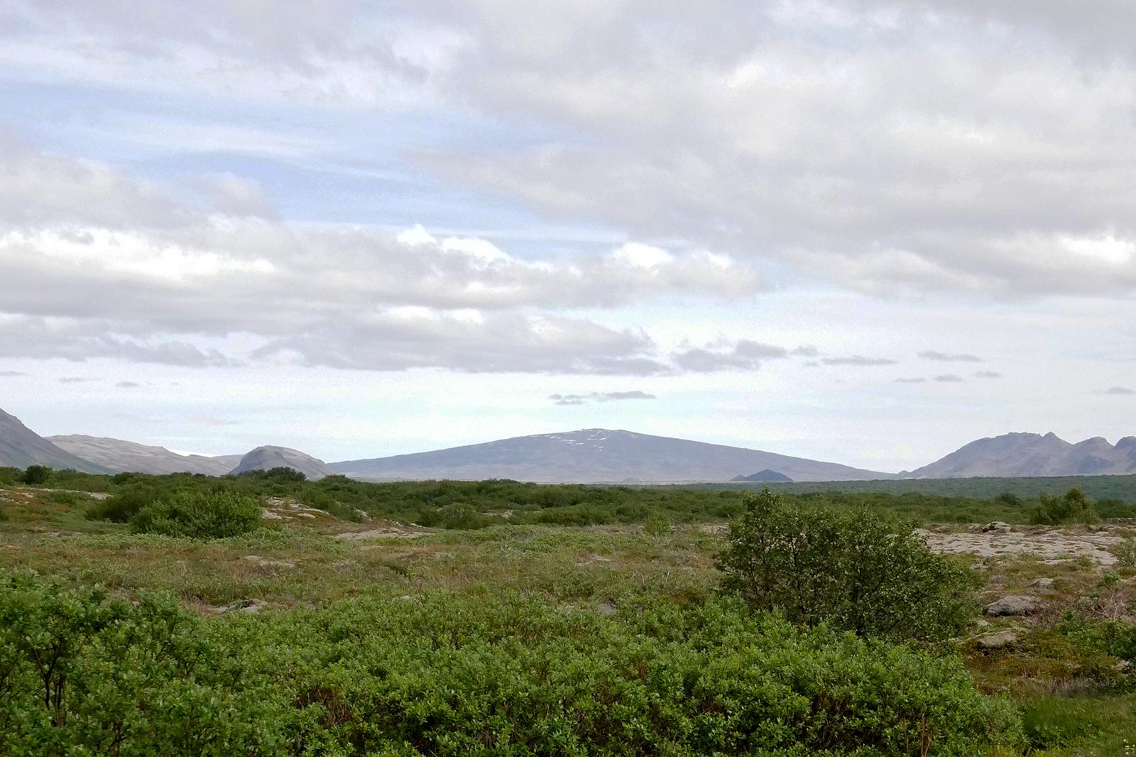 Skjaldbreiður